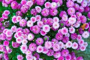 flowers-3788120_960_720