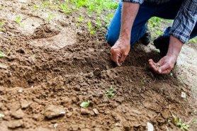 soil-2561136__340